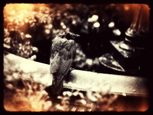 The Crow, treatment 3