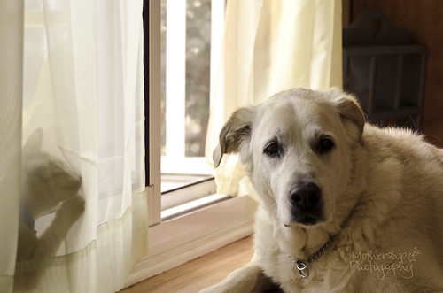 狗遇见猫,第二幕
