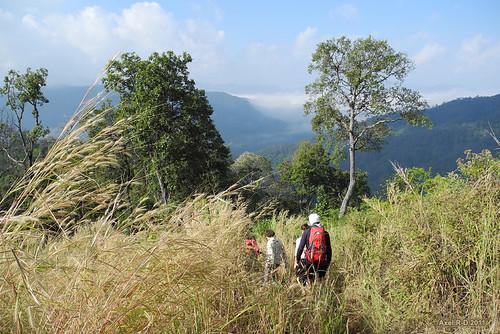 Jungle near Chiang Mai