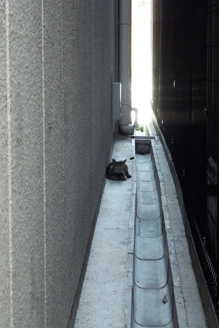 Today's Cat@201-07-06
