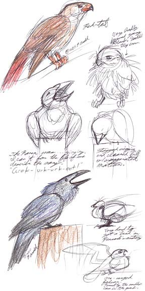 6.28.11 - Maine Wildlife Park Sketches