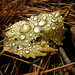 Water droplets on a leaf in Stone Valley. Photo: Jayne Galusha, Potsdam NY.