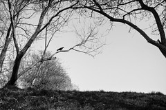 a CROWS HOME . 2011 (LUKE AT WORK) Tags: street leica white black color robert alex work frank photography joel luke cartier photographic moment henri bresson webb decisive anthology meyerowitz vagnolini lukeatwork welcometothecage