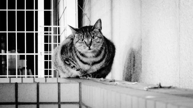 Today's Cat@2012-04-04