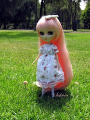 Fungus & Sakura - Pullip Tiphona (Selene Gray) Tags: pink doll dolls eyelashes lolita groove sakura pullip coolcat junplanning innocentworld leekeworld rewigged 16scale rechipped tiphona pulliptiphona