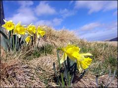 dh - prat de bouc ce dimanche d'avril