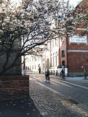 Lund Sverige (YYNTL) Tags: lund spring sweden lente bloesem zweden voorjaar foarjier