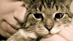 DSC07056.JPG (Davidshansen+) Tags: pet cute cat bigeyes kat chat pussy gato katze   puss mis gatto figaro  huisdier pussycat haustier annoyed   kucing pusa    cattus animaldeestimao  missekat     conmo