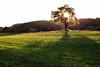 casting shadows (Dennis_F) Tags: shadow sun sunlight tree green sony wiese sigma glowing fullframe dslr 50 sonne schatten baum 50mmf14 sigma50mm leuchten sonnenlicht sigmalens a850 festbrennweite sonyalpha sonydslr vollformat sigma5014 sigma50mmf14 sigmaobjektiv dslra850 sonya850 sonyalpha850 alpha850
