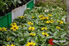 ... (alaa_Photography) Tags: flowers