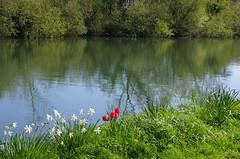 931-10L (Lozarithm) Tags: flora canals 1770 k5 sharpness gloucs gloucestersharpness smcpda1770mmf4alifsdm pentaxzoom