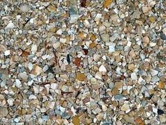 schelpen pad (dietmut) Tags: design pattern path pad nederland thenetherlands shell structures april schelpen weg zuidholland 2014 hoogvliet panasoniclumix zalmplaat dmcfx500 yourfavorites94