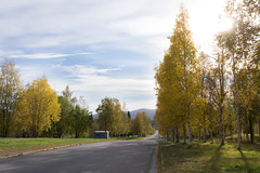 Malmberget, Sweden (Helen Lundberg Photo) Tags: gllivare sweden swedish scandinavia europe autumn fall colors malmberget small town lapland municipality outdoor trees tree road