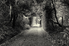 An old way (3pebbles) Tags: blackandwhite monochrome track path lane trees shade gravel
