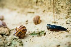 Bugs (jchmfoto.com) Tags: landscape animal invertebrate saragossa sunrise insect europe spain aragon insecto paisaje zaragoza amanecer es
