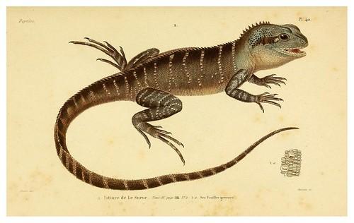 006-Erpétologie générale ou Histoire naturelle complète des reptiles 1834