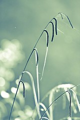 Sedge and bokeh (Steve-h) Tags: ireland dublin grass river bokeh soe sedge dodder earlymorninglight naature steveh canonef300mmf4lisusm canoneos5dmkii canoneos5dmk2 bestcapturesaoi mygearandme mygearandmepremium mygearandmebronze mygearandmesilver mygearandmegold mygearandmeplatinum mygearandmediamond ringexcellence aboveandbeyondlevel4 processedinightroom aboveandbeyondlevel1 aboveandbeyondlevel2 aboveandbeyondlevel3