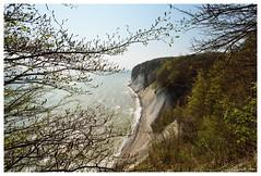 Hochuferweg (Caora) Tags: buchenwald balticsea rgen ostsee ruegen europeanbeech kreidefelsen fagussylvatica jasmund rotbuche d7100 commonbeech