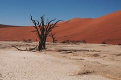 namibia2015-74 (yriis) Tags: namib desert sand immensity uninhabited wildness dune travel 45 red sky blue africa namibia kalahari