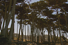 Lands End | San Francisco (THEMACGIRL*) Tags: trees nature cityscape sanfrancisco california light daylight canon7d 24105mmf40l yellow green landsend