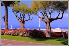 Front de mer   ARCACHON (Les photos de LN) Tags: frontdemer arcachon bassindarcachon aquitaine gironde massifs fleurs bancs promenade nature paysage couleurs lumire beaut vacances