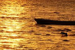 #850B7069 (Zoemies...) Tags: beach indonesia running balikpapan into melawai zoemies