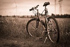 take a break (Stefan Lorse) Tags: field bike training germany deutschland break sommer saxony mountainbike feld canonef50mmf18 sachsen pause sonne fahhrad canoneos50d