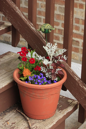 Brilliant Container Garden