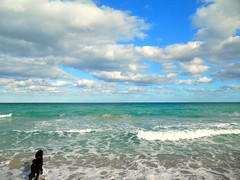 """Midnight looking at his Paradise.......Explore and """"Best in Show"""" (Midnight and me) Tags: ocean sky beach nature beauty clouds paradise florida bluesky retriever explore poodle midnight southflorida bestinshow beachscene standardpoodle oceanfoam blackstandardpoodle midnightandme oceanretriever midnightlookingathisparadise"""