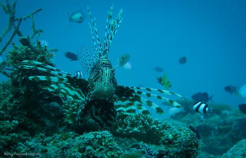 Malediven 2010 -2431
