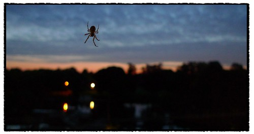 spider at sunrise