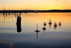 Make a splash (pominoz) Tags: sunset lake reflection boat yacht valentine nsw splash buoy lakemacquarie