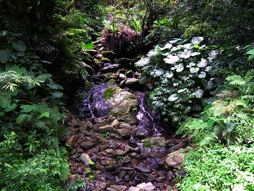 烏來內洞瀑布_37_2011.07.07