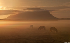 Misty Morning (skarpi - www.skarpi.is) Tags: morning horses horse mountain fog sunrise island iceland mood goodmorning sland mistery brfell hekla icelandic ranga hestar suurland southiceland oka hrauneyjar jrs theicelandichorse mtbrfell heklubygg