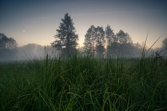 Remains of the Day II (Dietrich Bojko Photographie) Tags: mist nature fog evening abend fineart natur lee filters naturpark brandeburg naturparkbarnim dietrichbojko d7000 dietrichbojkophotographie