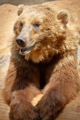 The Laughing Bear (John Jacobs) Tags: bear sc columbia tgif riverbankszoo specanimal beautifulcapture
