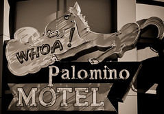 Palomino Motel (Route 66) (TooMuchFire) Tags: signs sepia route66 neon lasvegas neonsigns motels vintageneonsigns neonsignage neonopolis motelsigns palominomotel oldneonsigns route66signs neonanimals toomuchfire