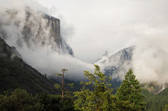 Cloud-wrapped El Capitan with sun-lit hill trees in front. Tunnel View. Looked like a watercolor to me. S95. #4520 (andrys1) Tags: california landscape yosemite yosemitenationalpark elcapitan tunnelview clearingstorm stormclearing maysnowstorm