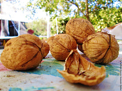 Nuts (Nueces) (j_santander74) Tags: canon nuts canonpowershot dryfruits nuez frutossecos nueces ncula canonpowershota2500