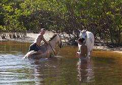 Cleaning the horses, Praia dos Nativos, Trancoso, Bahia (maxunterwegs) Tags: brazil horse brasil caballo cheval brasilien bahia cavalo pferd brsil trancoso praiadosnativos