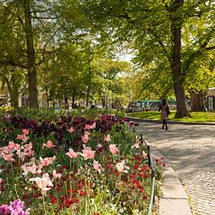 Vr Malm V (Gustaf_E) Tags: green architecture town skne spring sweden sverige malm stad scania arkitektur vr