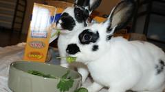 Nom, Nom, Nom (Au in paradise) Tags: cute bunnies nomming