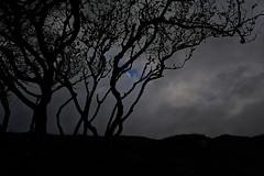 _DSC9922 (Danilo Melzi) Tags: travel skye scotland di viaggio isola scozia travelevent