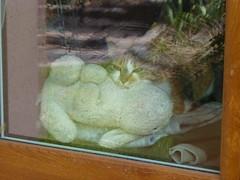 Bambou et son doudou ... <3 (valkiribocou) Tags: window bamboo doudou fentre bambou comforter cocoon securityblanket derrirelafentre  mantadesegurana