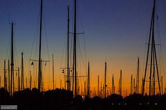 Harbour sunset (Anneke Jager) Tags: annekejager sfeer sunset zonsondergang blue bluehour silhouette silhouet haven harbour ships outdoor skyline dusk