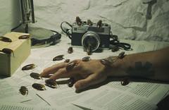 Plague. (jcalveraphotography) Tags: selfportrait selfie serie 365 photo photographer projects plague bugs