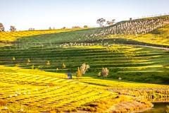 National Arborteum Sunrise-30 (Quick Shot Photos) Tags: act australia canberra canon floriade nsw theresa molonglovalley australiancapitalterritory au
