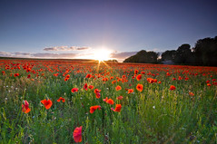 (Claire Hutton) Tags: uk flowers trees light sunset red wild sun sunlight green field clouds cottage dorset poppy poppies poppyfield leefilters ndgrads
