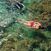 Swimming with the Sea Snake,Limu Pools, Niue