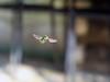 Mosca Varejeira (Marcelo Knesebeck Nanni) Tags: bug mosca varejeira